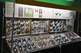 Łeba Atrakcja Muzeum Motyle Świata