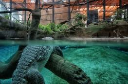 Wrocław Atrakcja Zoo Afrykarium