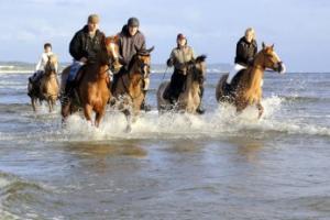 Świnoujście Atrakcja Jazda konna Ośrodek jazdy konnej Kopytko