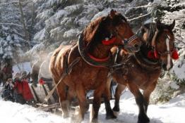 Krynica Zdrój Wydarzenie Impreza zimowa Kulig z pochodniami malowniczą górską scenerią