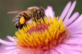 Wisła Wydarzenie Warsztaty Przyczółek dla pszczółek